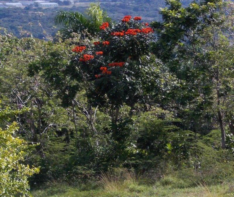 Amapolas in bloom